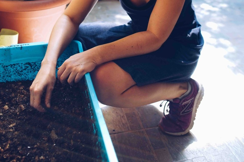 Composting in the City by Way of Worms